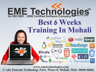 Six Week Training In Mohali