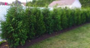Plant a tree hedge or a tree in your home